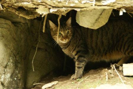 僕の洞窟5
