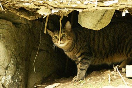 僕の洞窟6