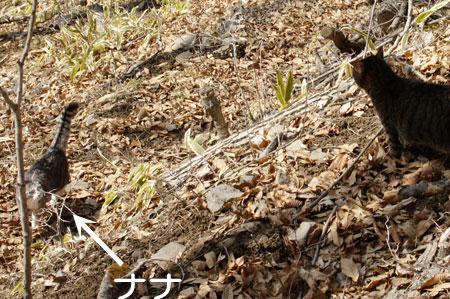 ナナの松の木7