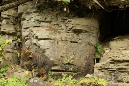 僕の洞窟8