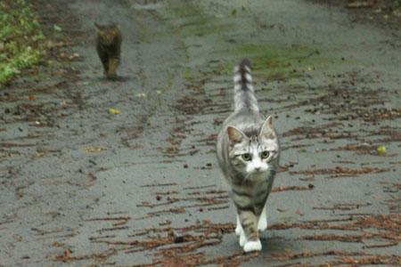 雨上がりのお散歩3
