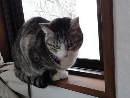 起きたらまた、雪3
