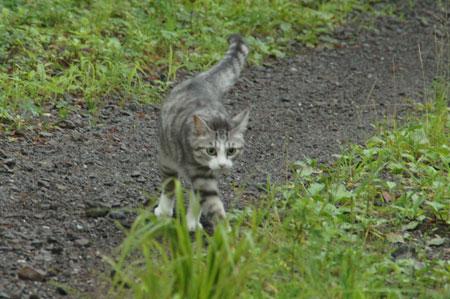 雨上がりのお散歩4