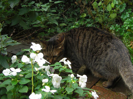 ぼく、お庭2