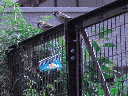 小鳥さんたち3