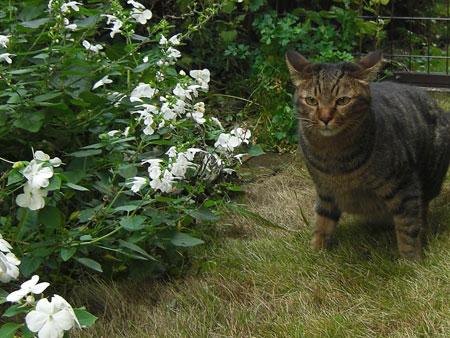 ぼく、お庭4