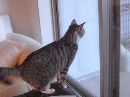 久しぶりのボス猫さん1