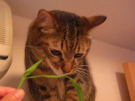 ぼくの、草!1