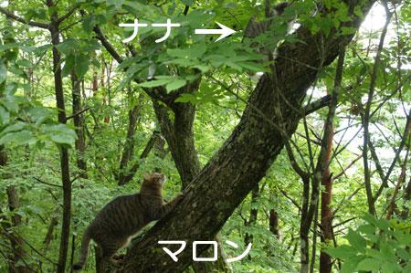 木登りごっこ1
