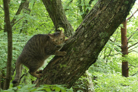 木登りごっこ2