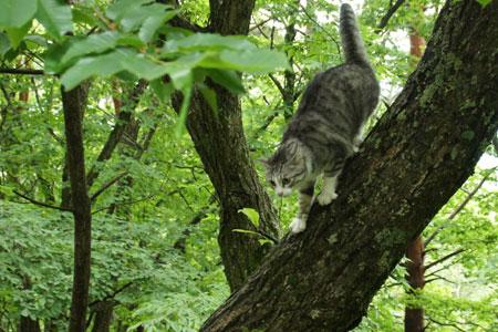 木登りごっこ3