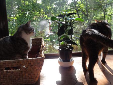 午後の窓辺3