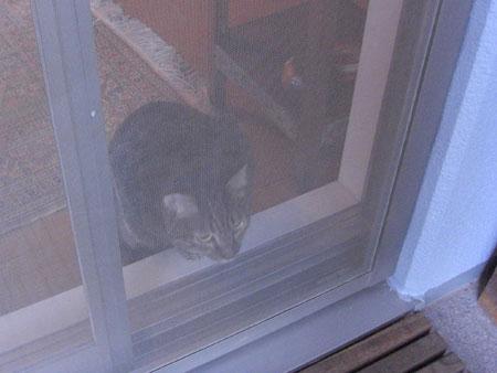 久しぶりのボス猫さん4