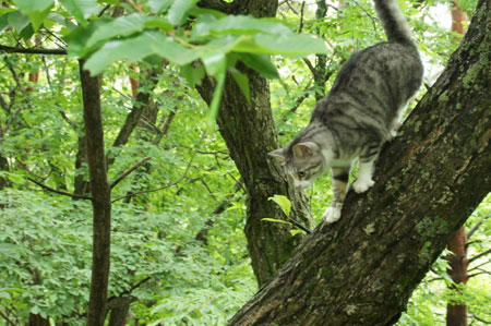 木登りごっこ4