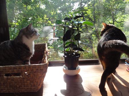 午後の窓辺4