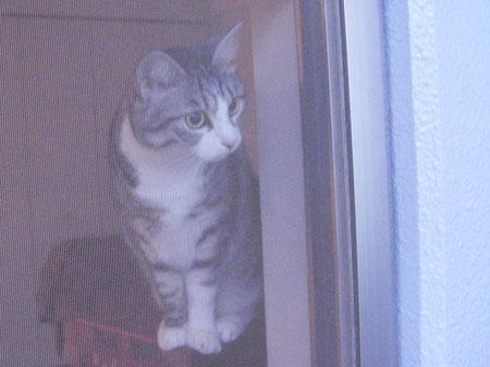 久しぶりのボス猫さん5