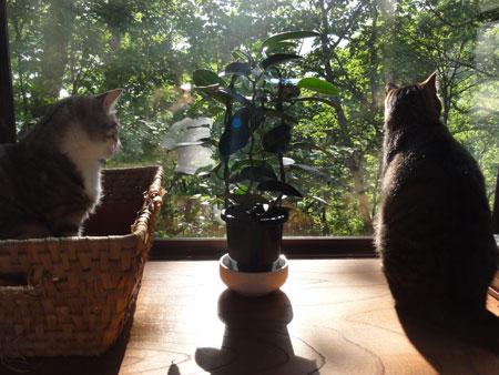 午後の窓辺5