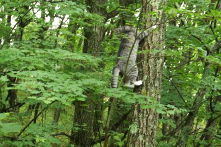 木登りごっこ6