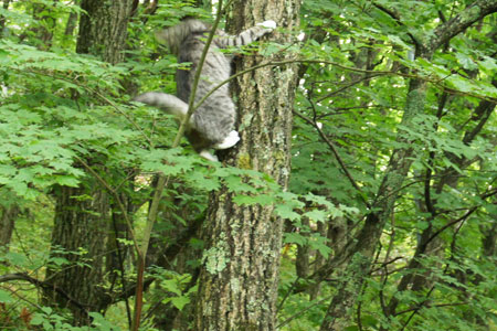 木登りごっこ8