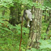 木登りごっこ11b