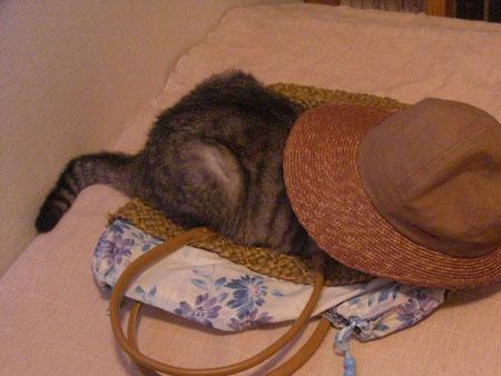 帽子とトート3