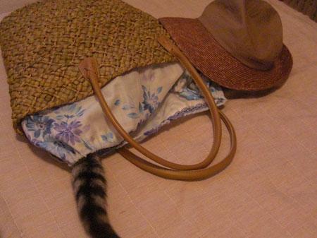 帽子とトート7
