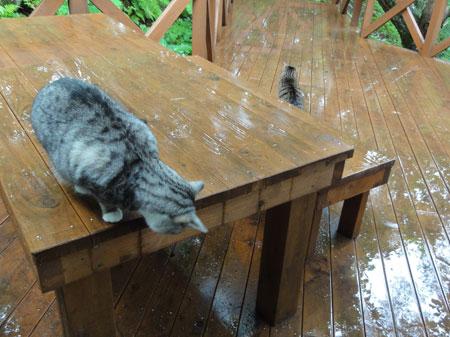 雨上がり8
