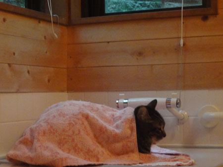 雨の日のバスルーム1
