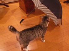 傘、好きなの2