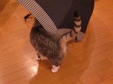 傘、好きなの3