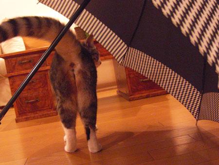 傘、好きなの6