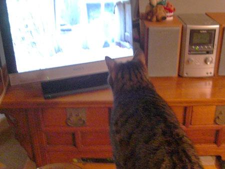 テレビに猫1