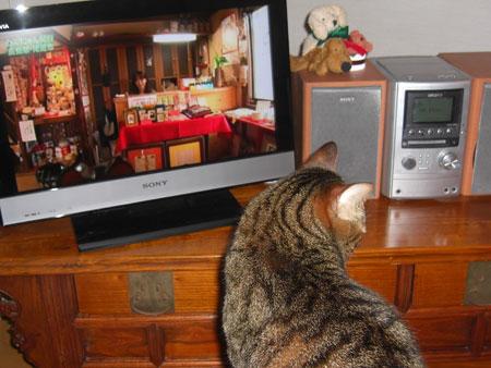 テレビに猫3