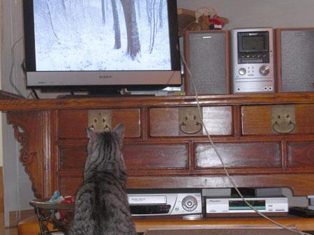 ナナとテレビ3