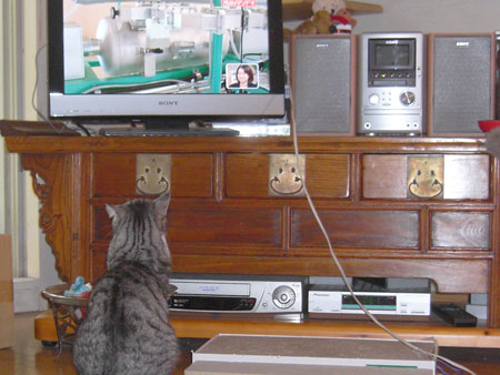 ナナとテレビ6