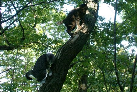 いきなり、木登り2