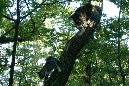 いきなり、木登り3
