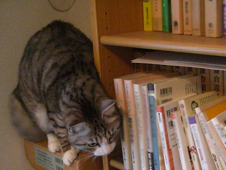 本棚のナナ5