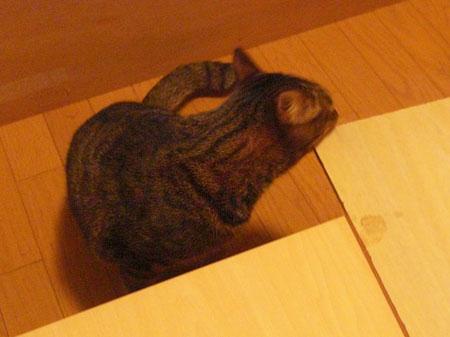 ベッドの下は・・・2