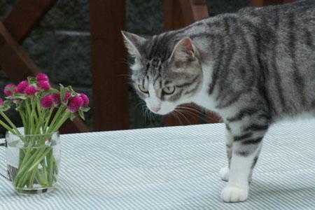 テーブルにお花3