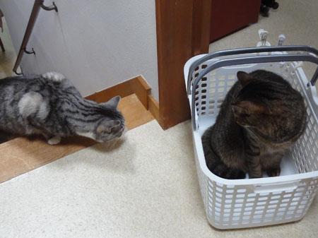 ぼくの籠?3