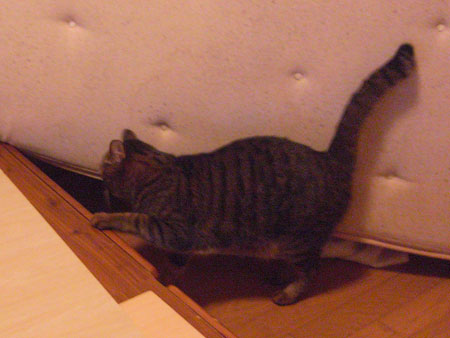 ベッドの下は・・・4