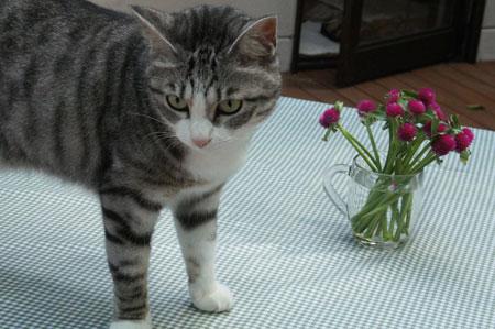 テーブルにお花 5