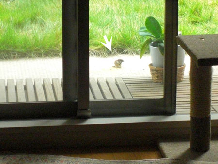 小鳥さん・・・1