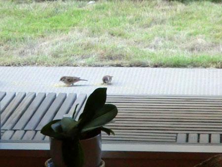 小鳥さん、きた?4