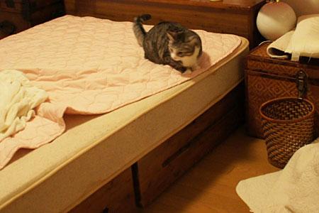 ベッドメークはお遊びタイム