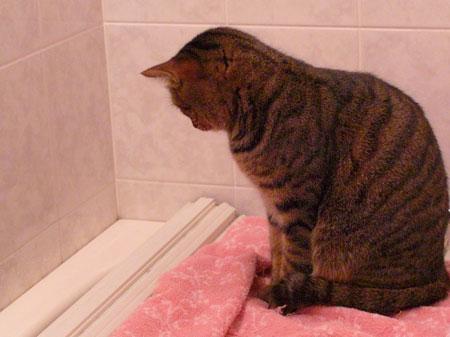 バスルームのマロン3