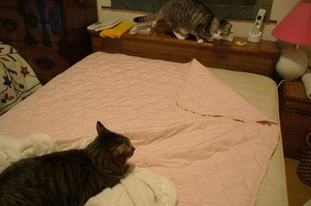 ベッドメークはお遊びタイム5