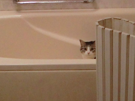 バスルームは清掃中1