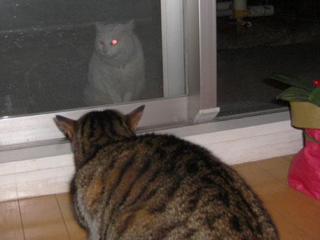 夜の訪問者8